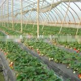 plastic LLDPE mulch film/agricultural polyethylene mulch covering film/mulch new film price
