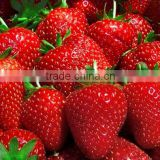 Natural Fresh Strawberry In Bulk