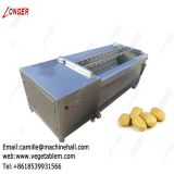 Fruit and Vegetable Washing and Peeling machine|Brush Washer|Potato Cleaning Machinery|Ginger Washing Machine Suppliers