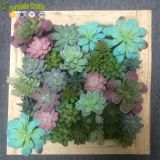 50*50cm Artificial Succulent plants plastic Ferns green grass photo frame wall decoration flowers home