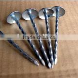 COMMON IRON NAILS FROM CHINA