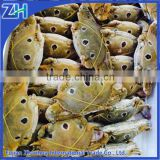 Redspot swimming crab(Portunus sanguinolentus)wholesale live seafood frozen crab meat export