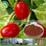YuenSun Organic Plant Extract Goji Berry Powder