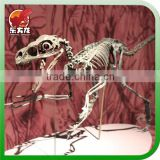 Museum professional life size dinosaur skeleton for sale