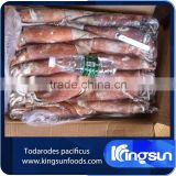 Frozen todarodes pacificus squid price whole round seafood exporter