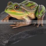 Green and Golden Bell Frog on Rock