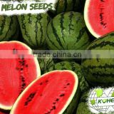 Kohenoor KIAS Hybrid Yellow Watermelon Seed