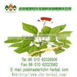 delay aging prevent heart disease pure natural Ginsenoside Ginseng Extract