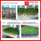 Hot selling grass seeds planting machine mung bean sprout machine seedling planting machine