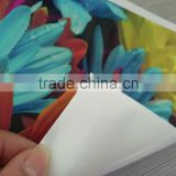 Matte PP paper for roll up banner/poster