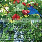 Black Extruded Plastic Mesh Anti Bird Netting For Vineyard,Apple Trees,Strawberry Garden And Other Agricultural Area