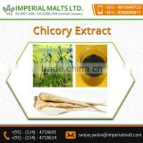 Organic and Natural Chicory Root Extract for Blood purifying Use
