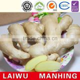 Hot sale organic fresh ginger high quality