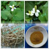 Houttuynia Cordata extract powder