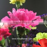Fresh Cut Flower Importers Carnation Cut Flowers Price From China Wholesale Carnation Flower