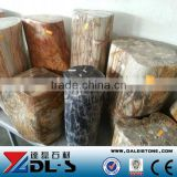 Petrified wood,high value luxary natural stone for collection