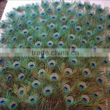 Wholesale indian peacock feather wedding dresses trim