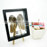 FOUSEN(039) Nature& Art natural gifts and crafts framed insects and butterflied