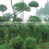 Large Artificial Grass Topiary Garden Landscaping Sculpture for Architectural Project Decorating