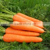 Wholesale fresh frozen/IQF carrot dices 2016 new material ,frozen chinese mix vegetables