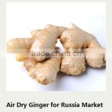 China organic ginger professional supplier