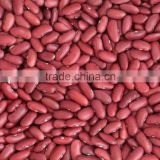 Round Red and White Speckled Kidney Beans
