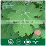 2014 best selling Macleaya Extract for Biopesticide Additive