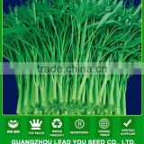 MWS03 Qigeng green stem hot sale green water spinach seeds supplier