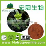 GMP certified alibaba China manufacturer supply lowering blood pressure tribulus terrestris extract powder 70%saponins
