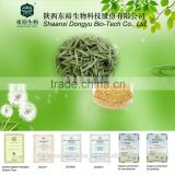 GMP Factory supply best anti-oxidant products tea polyphenol benefits green tea extract powder