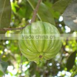 Custom OEM Garcinia Cambogia extract capsule with private label weight loss product