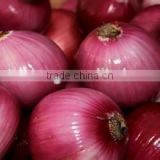 2016 Crop new Fresh Red Onion at cheap price of Big Size 5-7cm