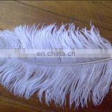 lovely white 35-40cm ostrich feather from south Africa