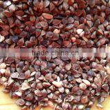 high quality hot sale black bitter buckwheat for tea (Fagopyrum esculentum)