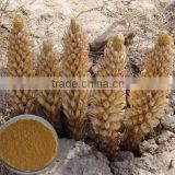 Water souble extract of Cistanche deserticola extract powder
