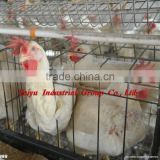layout poultry farm house design ( product, equipment )