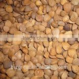 Supply with Chinese New Crop Bitter Apricot Kernels with Good Quality for Sales