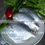seafood and cooked frozen silver pomfret fish