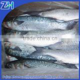 frozen grey mullet fish for sale without roe