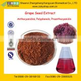 GMP Factory Supply High Quality Grape Skin Extract Powder