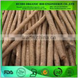 Burdock / chinese burdock root