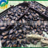 New Crop Chinese Black Watermelon Seed