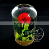 10x18cm The Little Prince red rose dry preserved flower glass dome home decoration table centerpiece indoor gardening 0120001