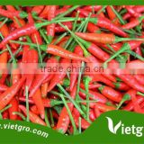 High Yield F1 Hybrid Red Chilli Pepper Seeds VGCL 01/ Vegetable seeds