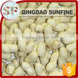 Best selling products raw peanuts seeds in shell for sale