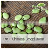 Natural plant good quality broad bean