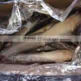 Chinese Frozen Cat Fish Factory Price