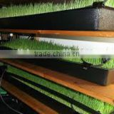 China Customized Plastic Seedling Propagation Flat Tray from Factory