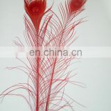 top quality red natural 80cm-90cm peacock feather