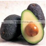 Bulk Avocado oil for Exports